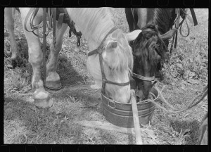 Watering horses, central Ohio.2